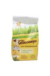 Пшеница для проращивания, 500г, Дивинка